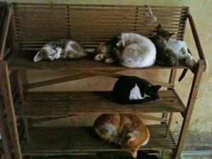 Cat Condominium, Fez Medina