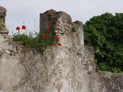 Poppies, ruined wall