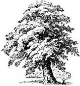 Arbor Day Poetry Tree - Ukiah CA